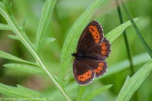 Неопознная бабочкаАвтор фото - Вячеслав Степанов