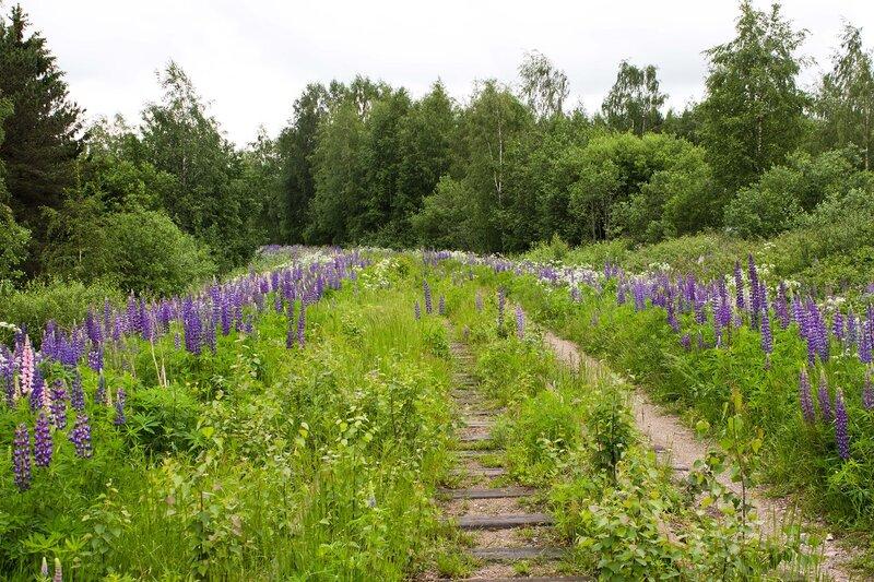 заброшенная железная дорога в Отава (Otava)