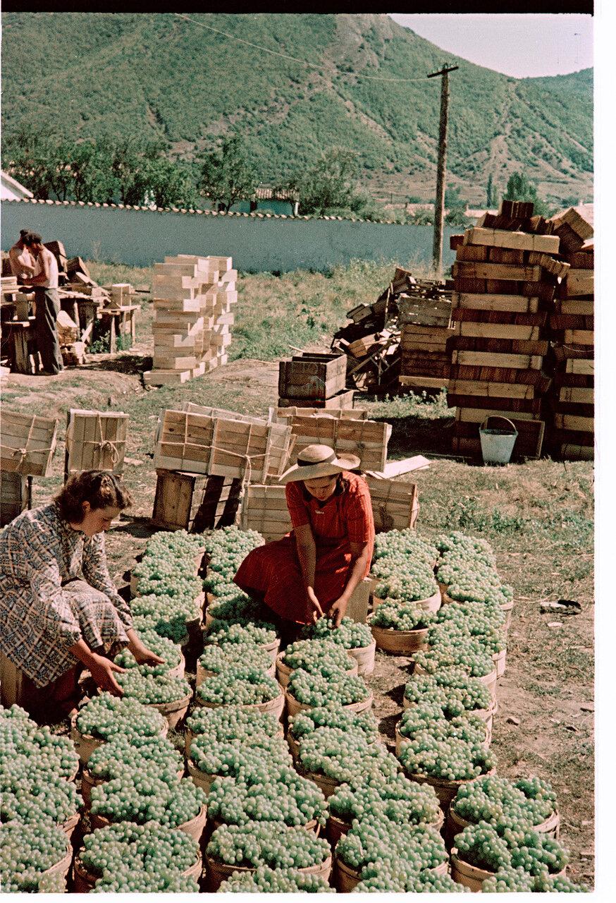 Винсовхоз Коктебель. Упаковка винограда для отправки в северные районы страны