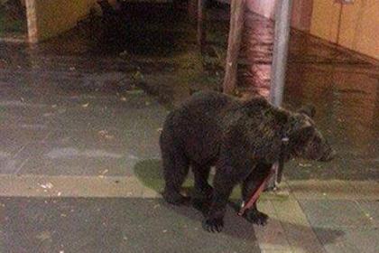 Ради посещения бара артист из Испании привязал медведя к фонарному столбу