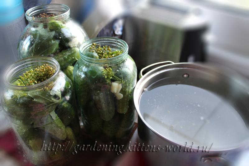 Огурцы соленые по-новгородски