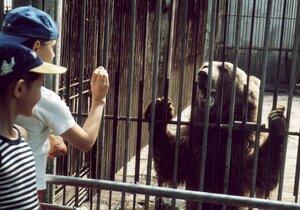 Дети и медведь
