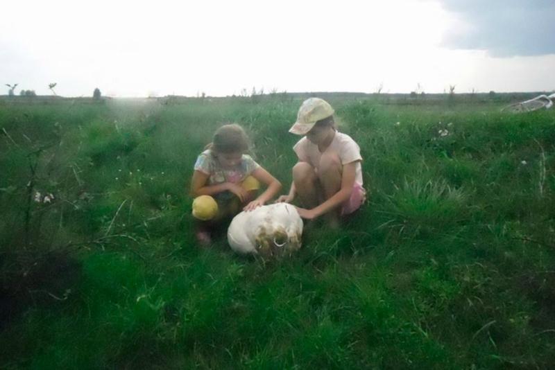 В Светлогорске нашли гигантский гриб массой 7,5кг