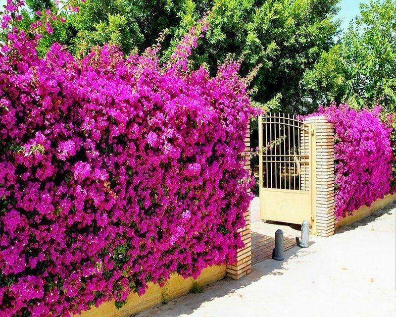 Нерха – городок в Испании