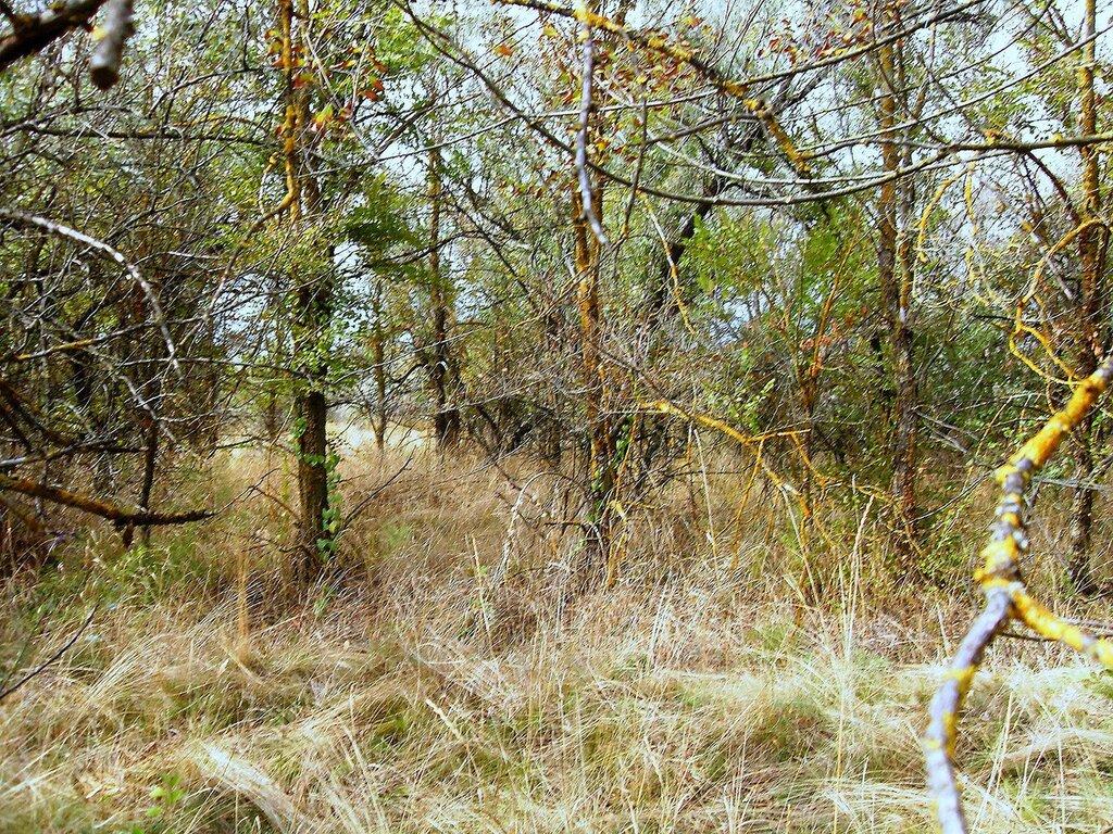 В лесу .... SDC14862.JPG
