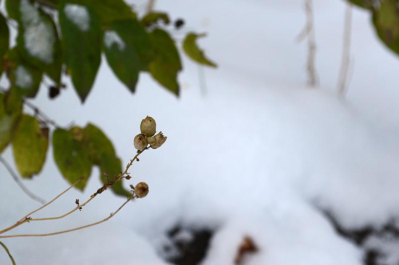 осень под снегом 3