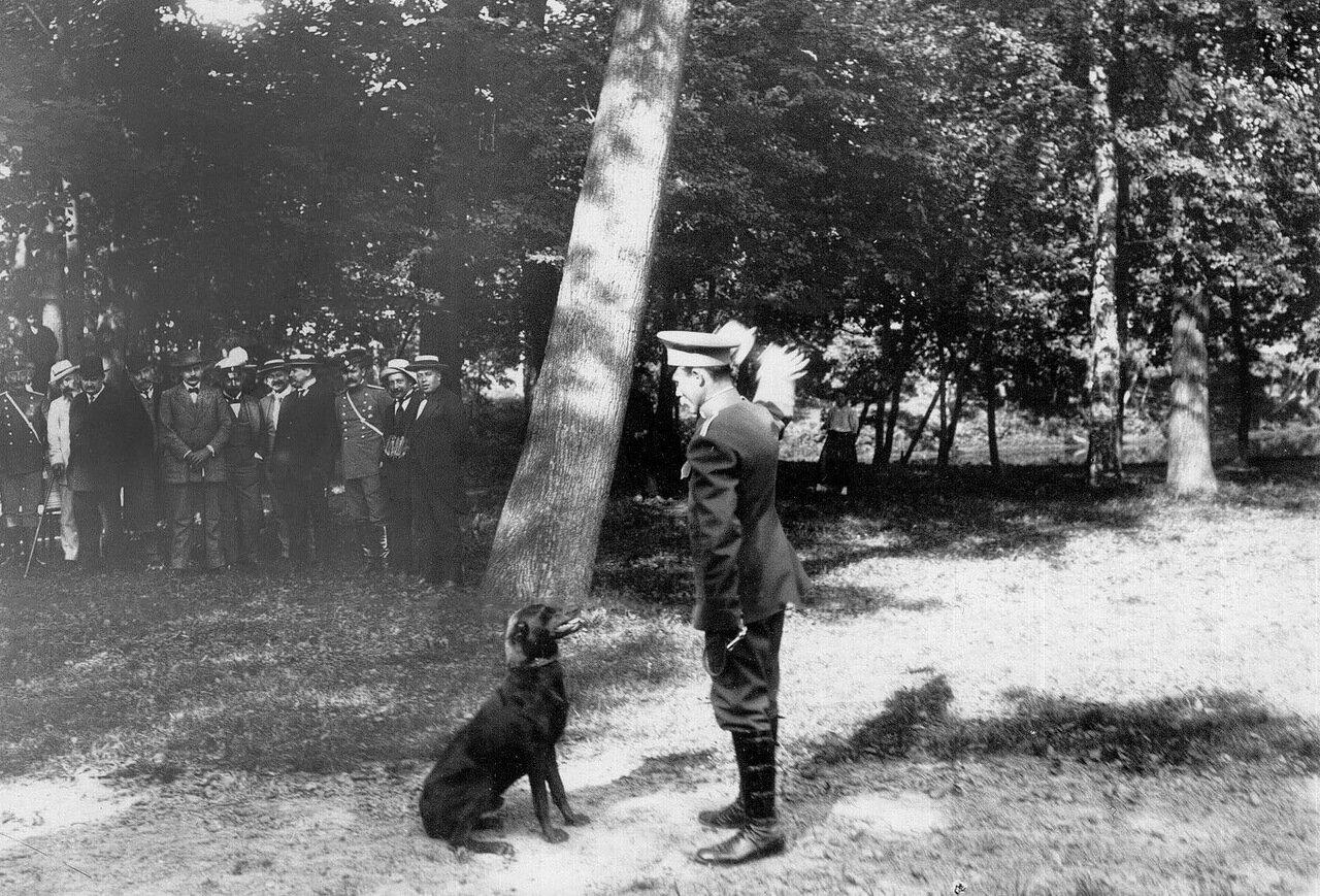 09. Дрессировщик отдает приказание собаке