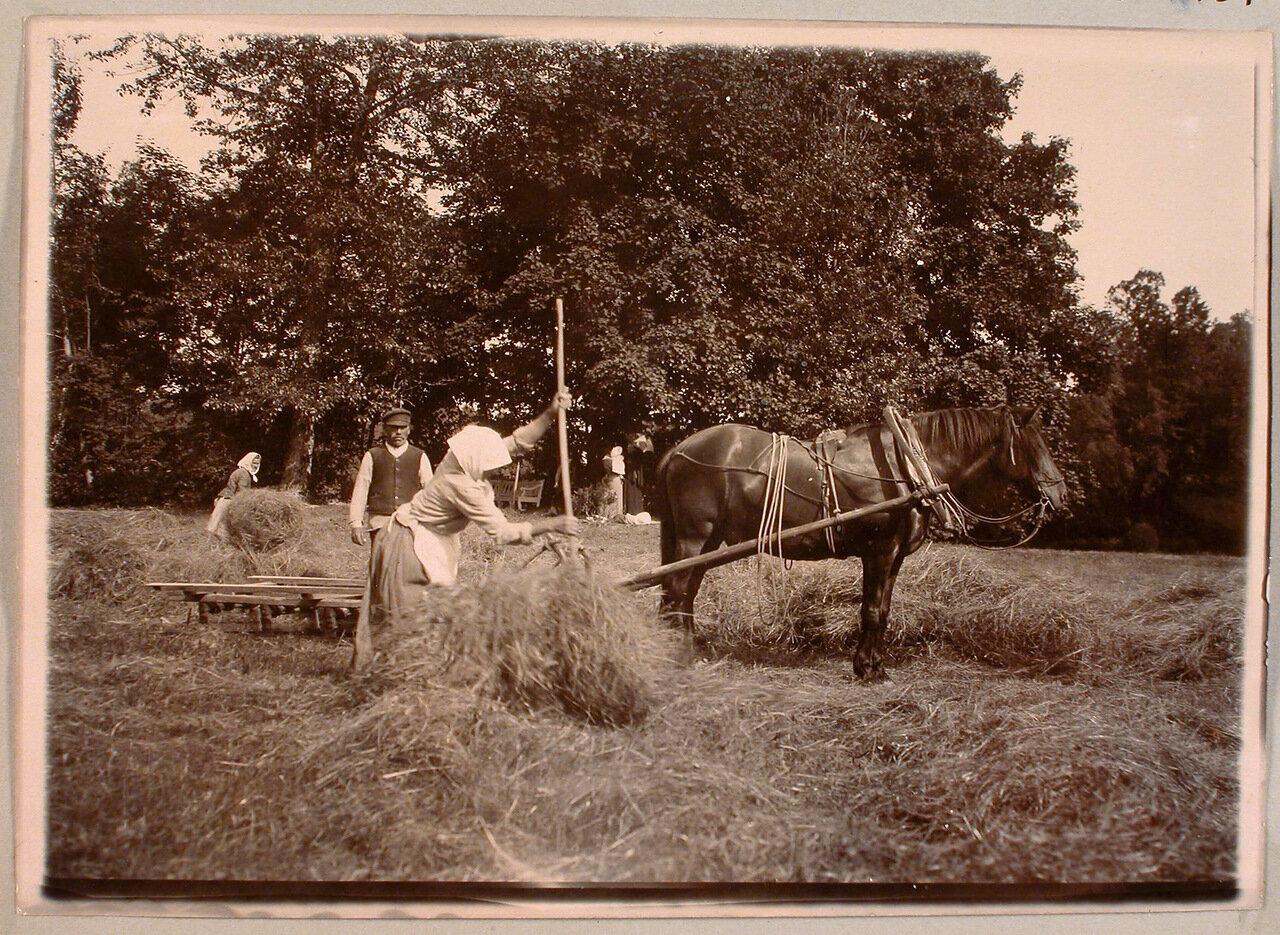 70. Крестьяне за уборкой сена на территории имения