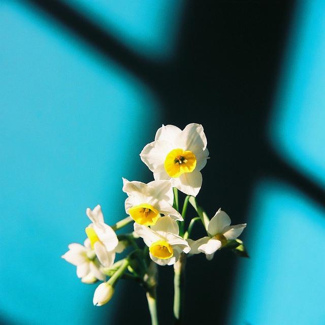 Send no flowers, Kumiko Sekiguchi280.jpg