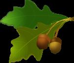 autumn acorn background [преобразованный].png