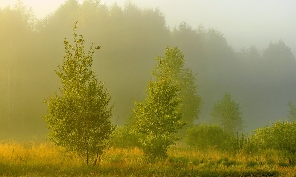 тёплый туман