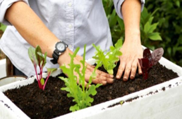 Дренаж из пенопласта-Контейнер из пенопласта для растений
