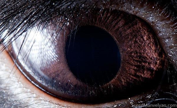 Сурен Манвесян. Фотографии глаз животных крупным 0 122fbe 2f924c5b orig