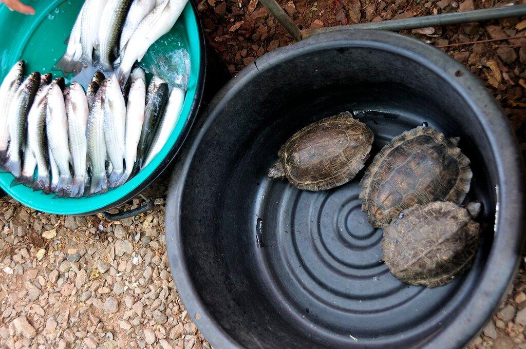Черепахи на продажу в Таиланде