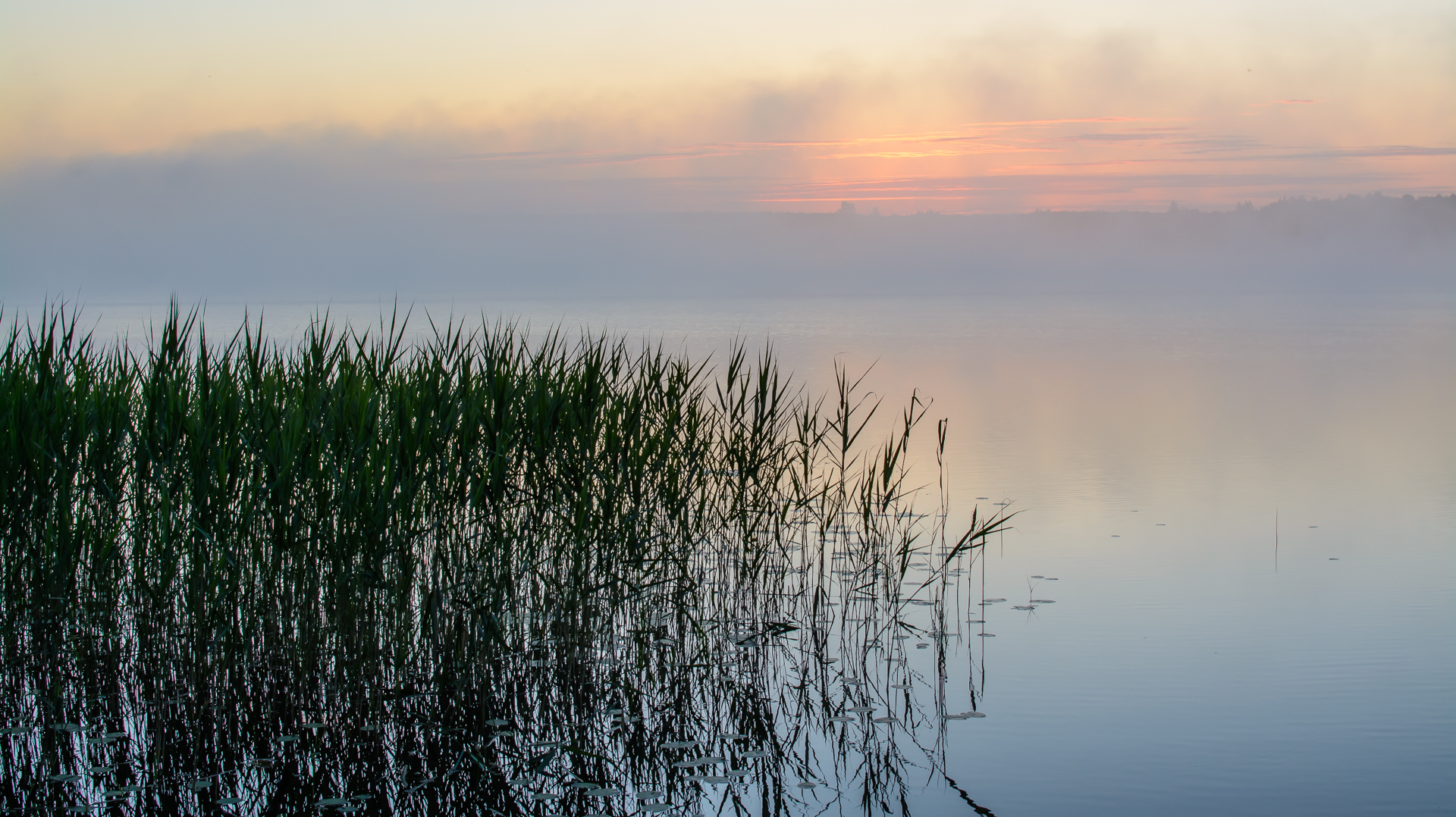 Хроника рыбацкого утра. Автор фото: Вячеслав Степанов