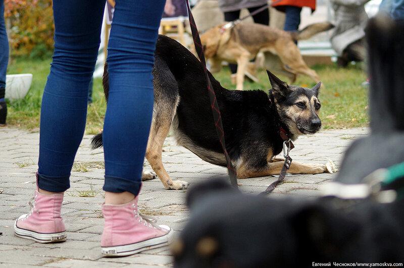 Осень. Фестивальный парк. Собаки. 04.10.14.11..jpg
