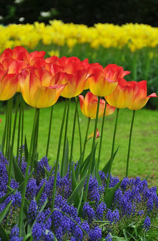 Пришла весна - очаровала