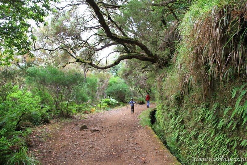 Мадейра, Рабасал