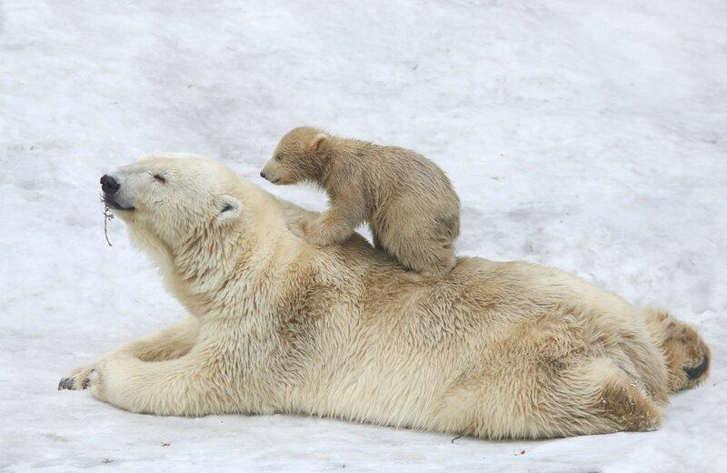 """""""Мам..!!! Чего лежим.?! Кого ждём..?!!!.Поехали уже..!!!"""""""