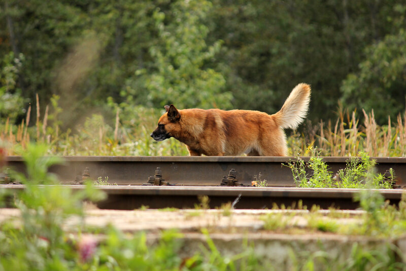Собака на станции Махерово