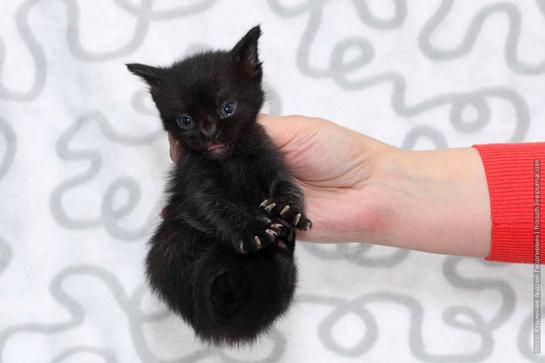 пантеретта котенок фотография