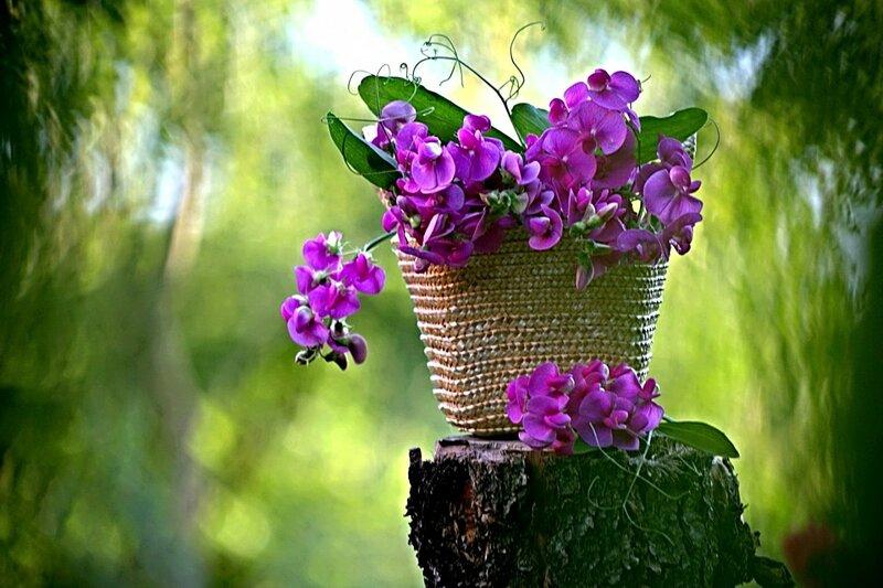 Для тебя все цветы в этом сказочном мире! Натюрморты