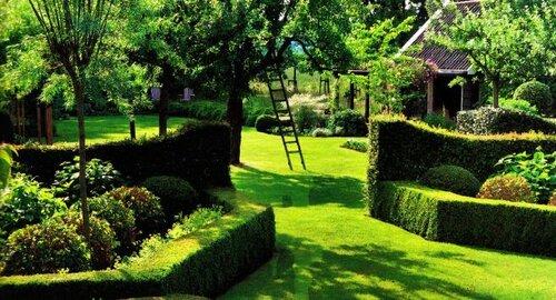 Зеленые изгороди в саду