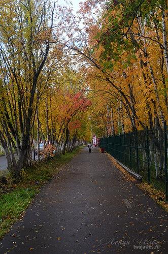 Фотография Инты №7251  Пешеходная дорожка в западном направлении вдоль забора Полярной 18 (бывшей школы №1) 16.09.2014_12:20