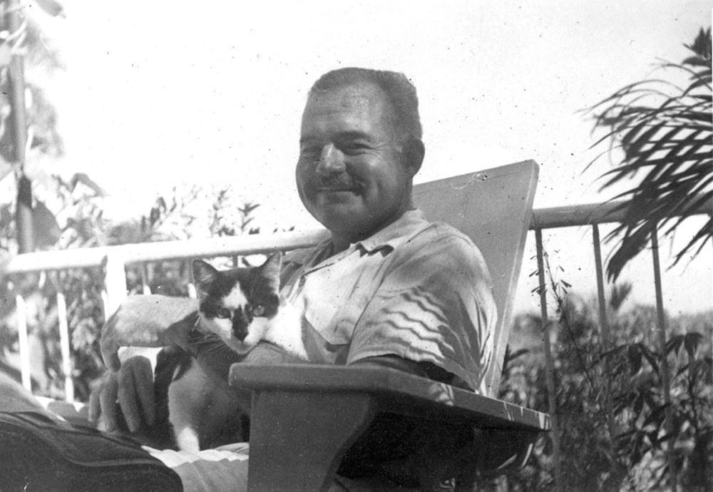 the lack of communication in cat in the rain a short story by ernest hemingway Essay hemingway's in our time: lost generation ernest hemingway uses intense short stories to she speaks of a cat in the rain- her.