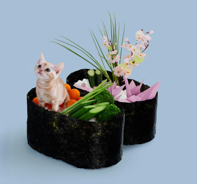 Кото-суши / Neko-Sushi. Рекламный кото-фото-проект компании Tange & Nakimushi Peanuts. 20 фото