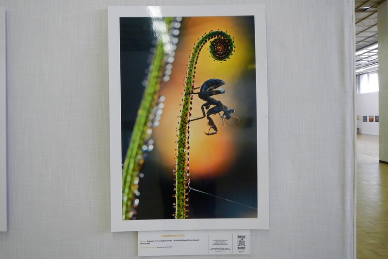 Микрокосмос. Андрес Мигель Домингез (Испания). На фестивале дикой природы Золотая Черепаха