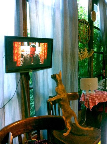 Смотрит TV впервые