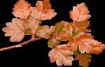 Carena_Autumn Crunch_18.png