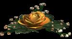 цветы (122).png