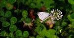 Бабочка-005.jpg