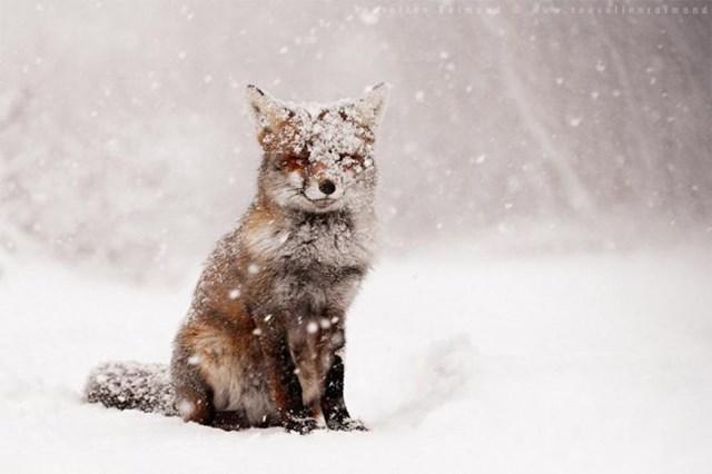 100 самых красивых зимних фотографии: пейзажи, звери и вообще 0 10f5c6 ca036e07 orig