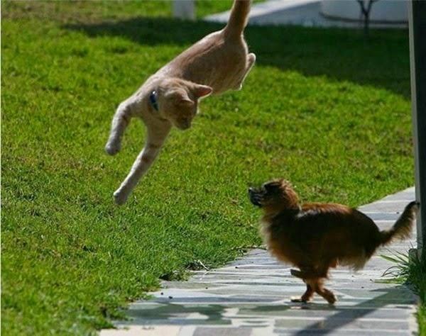 Радостные фотографии прыгающих людей и животных 0 130932 2f440a81 orig