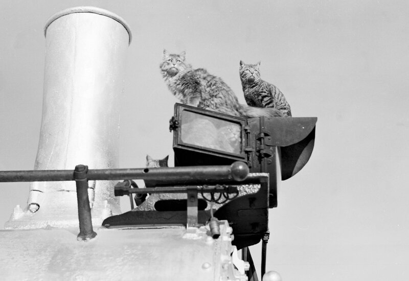 Cats climb on (and inside) the lamp of Denver and Rio Grande Western narrow gauge locomotive 346 at Alamosa (Alamosa County), Colorado, 1951 November