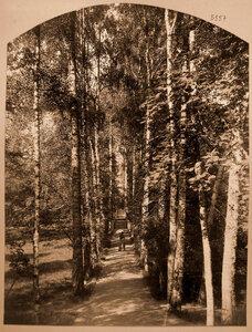 Вид березовой аллеи в усадебном парке.