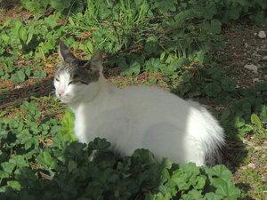 Кошки на Корфу