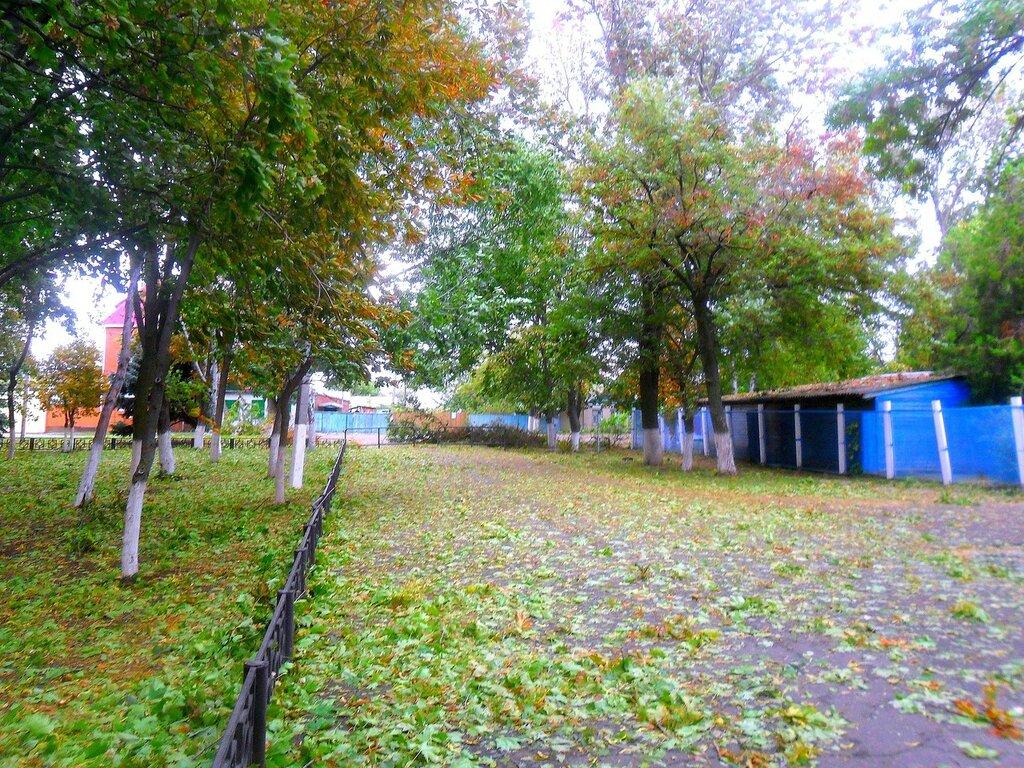 Листья, сентябрь, Азовское побережье, осенние картинки