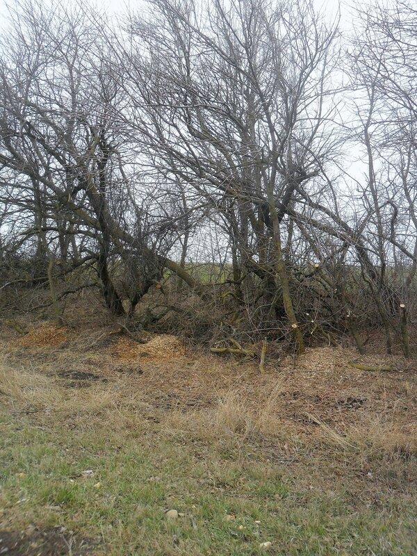 Деревья ... SAM_5283.JPG
