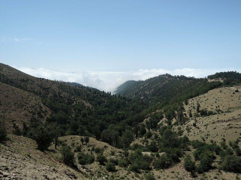верхняя граница леса