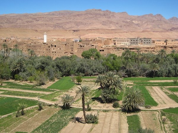 оазис в Марокко