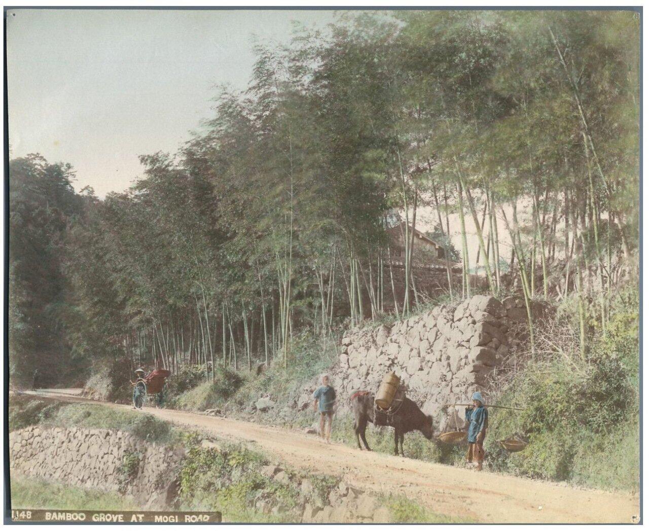 Роща бамбука на дороге Моги