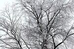 Снег (2).jpg