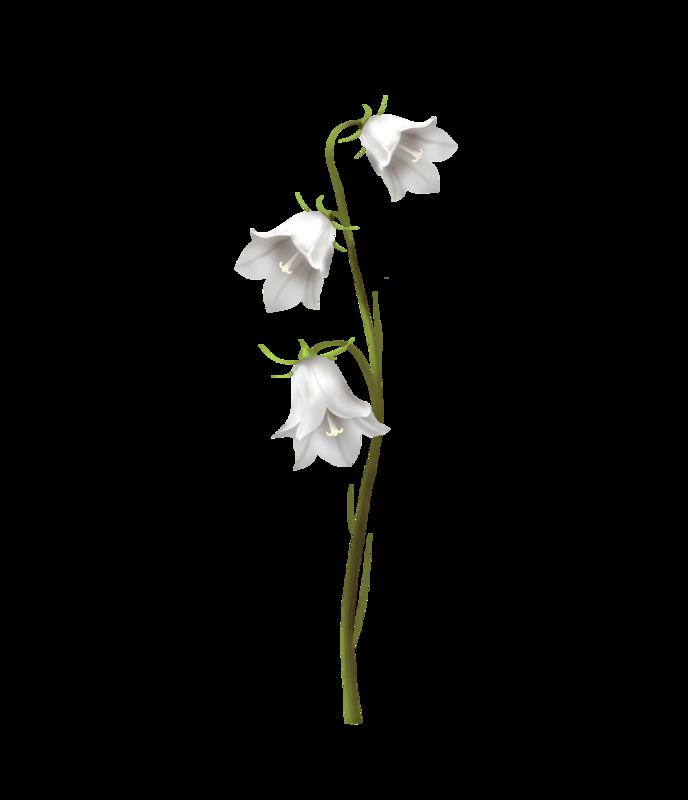 emeto_DearToothFairy_bellflower_white3.png
