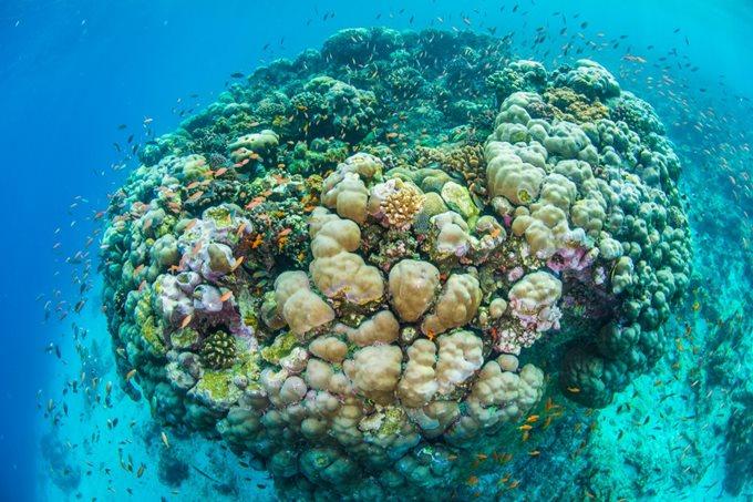The Manta Resort   подводные номера в отеле Танзании (фотографии)