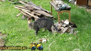кот Мурзя