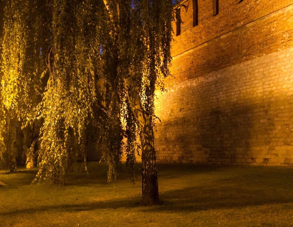 Береза у стен Нижегородского кремля